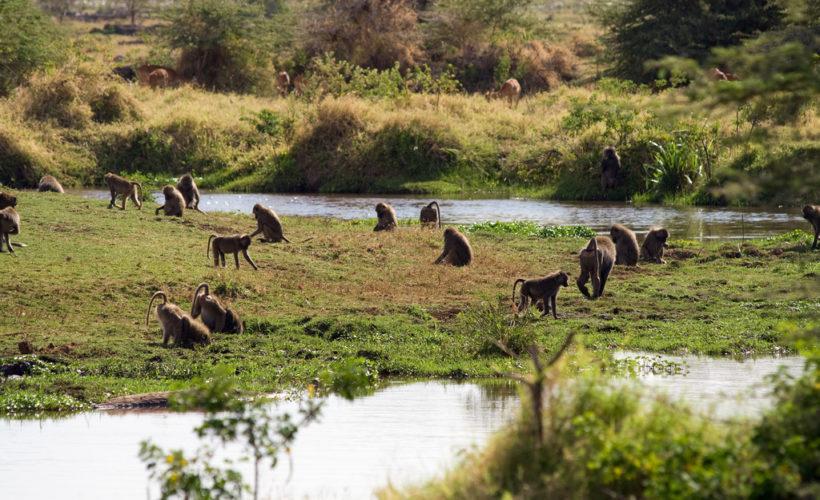 Lake-Manyara-National-Park