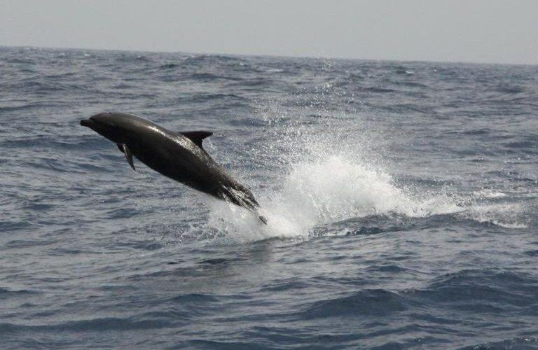 dolph-1