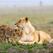 Masai-Mara-National-Reserve-Safaria